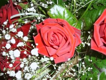 Roses Joéliah copyright